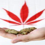 بیانیه جدید اداره گمرک آمریکا دربارهی ورود کارکنان کانادایی صنعت ماریجوانا